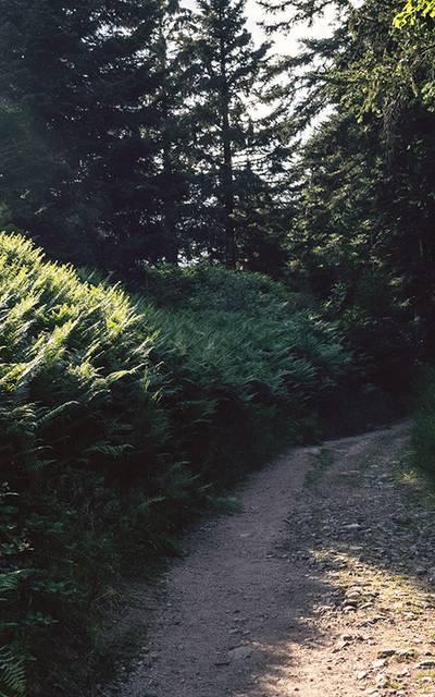 Wandern Epinal - Vogesenwald - Wanderführer