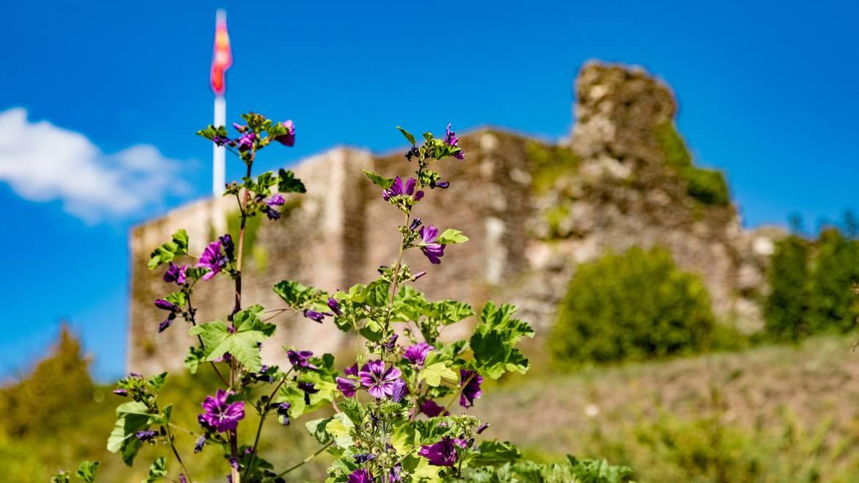 Etappe 3: 14 h 30 - Besichtigung mit Führung des alten Schlosses von Épinal und seines mittelalterlichen Gartens.