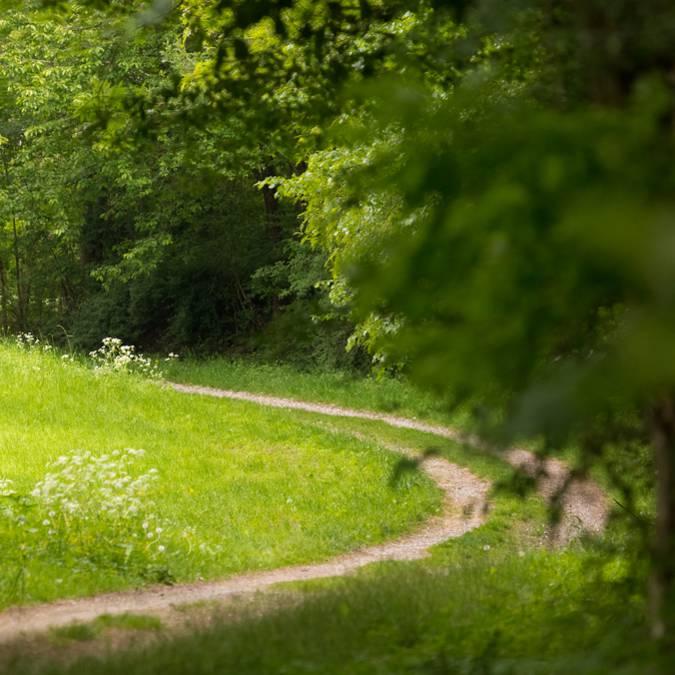 Reiten - Reiten in den Vogesen - Reiten - Landschaft